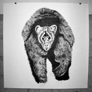 Grizzly Bear _small_ copy