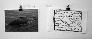Humpback Whale _small_