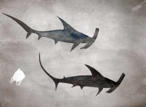 Plastic Bag and Hammerheads _S_