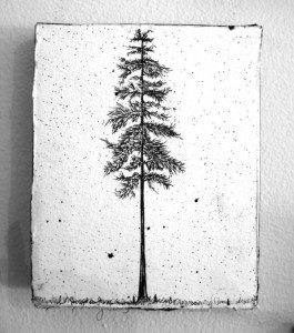 Six Inch Douglas Fir _small_