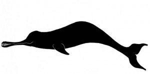copy_0_ganges river dolphin _small_