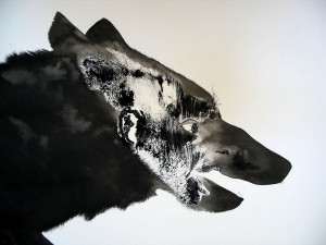 grey wolf detail _small_